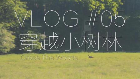 VLOG#05 穿越小树林