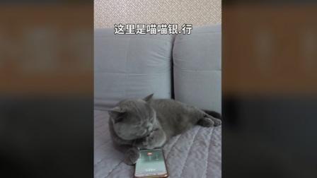 猫小歪打银行电话, 不会办事, 只为投诉工作人员, 原因竟然是这个