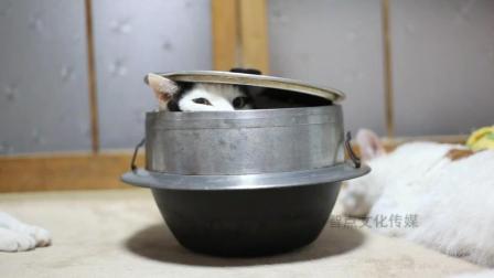 2只猫咪玩捉迷藏, 小猫咪的藏身之处, 快把主人笑惨了