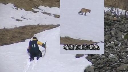 贝爷还想打雪狐的注意! 只是贝爷太没耐心了, 没等久点!