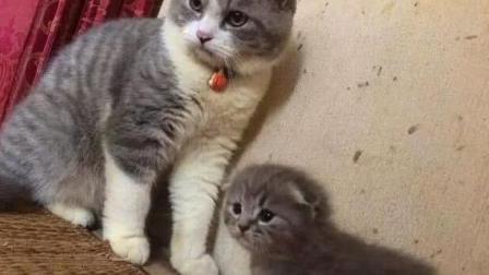 公猫质疑后代的基因,母猫这下不干了:一巴掌呼过去!