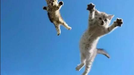 把猫从96米高楼扔下, 会发生什么? 结果让人意想不到