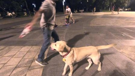 周末公园狗狗玩耍