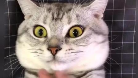 如何测试自己家的猫咪是不是很乖? 这位铲屎官可以把自己手里的刀放下了吧
