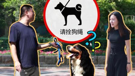 很多人遛狗不拴绳 美女街头给他们送牵引绳