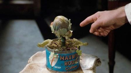 呆萌小伙买了一株怪植物, 每天用特殊东西喂养, 最后却变成这样了