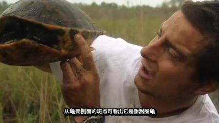 贝爷抓到一只甜甜圈乌龟, 柠檬味的烤乌龟, 贝爷都赞不绝口!