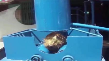 椰子好吃皮难剥——怎样去除椰子壳
