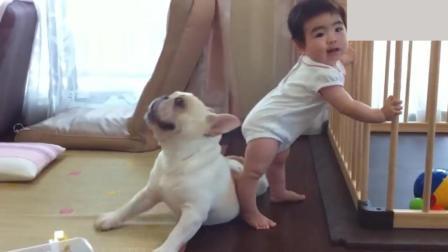 斗牛犬: 哎哟妈呀, 小主人你碰到我肚皮了, 还是爬开点