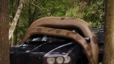 生物学家培养出变异鳄鱼, 实验途中意外惊醒, 溜到树林里闯了大祸!