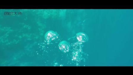 ZTC家族美娜多之旅  色色大师琉璃霜 潜水中 深入海底太美了
