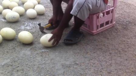 看看人家吃的什么蛋, 要用铁锤打开