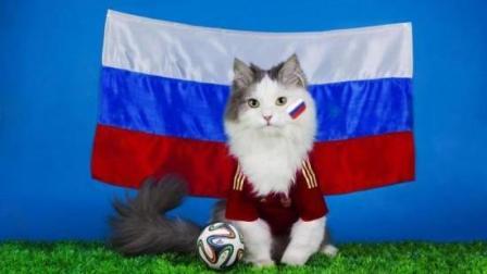 【每日一囧合辑】将球场上的足球P成猫咪后…门将和猫真的毫无违和感
