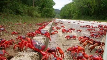 盘点世界各地泛滥成灾的动物, 中国吃货能消灭几种呢?