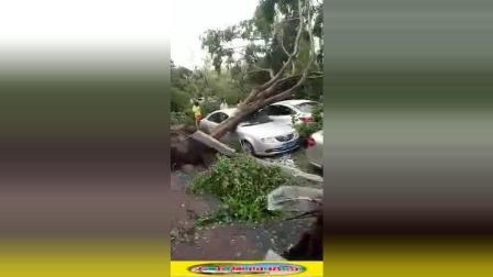 超强台风来袭, 拔树倒根, 砸坏多少豪车啊
