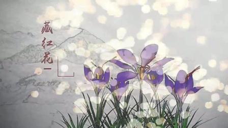 大名鼎鼎的藏红花, 终于看到了