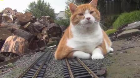 猫咪快让让! 火车来了!