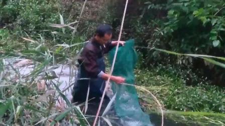 雨水刚退老顾在野河下了一条15长地笼, 网中水花翻动不知是什么货