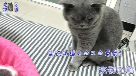 【宠物之道】公猫趁母猫不在偷偷咬猫宝宝, 母猫突然回来, 公猫的表情亮了
