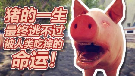给大家看看我们猪的一生