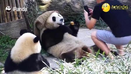 熊猫: 养大蔓越煤这兄妹俩不容易, 所以要多多拍照留念! 不过分把