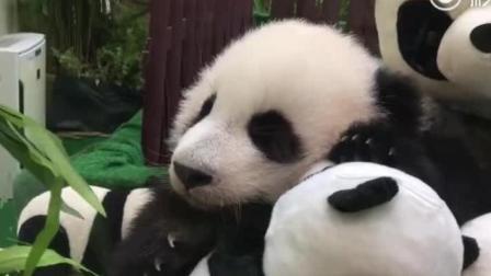 大熊貓暖妹妹: 和熊貓布偶一起睡覺, 睡的可香了!