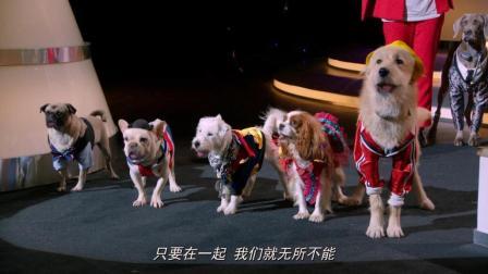 萌犬好声音《萌犬1》会唱歌的狗你喜欢哪一只?