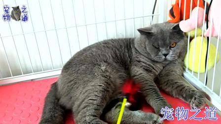 公猫因主人先给小猫喂饭生气了, 躲在角落越哄越委屈, 猫界表情帝