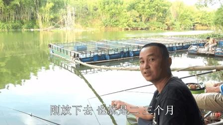 四哥来到河边野钓, 4.5米鱼杆是否用对了? 看完结果就知道了