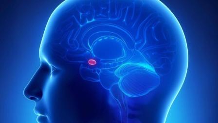 人类为什么喜欢酗酒, 科学家从杏仁核中找到了答案