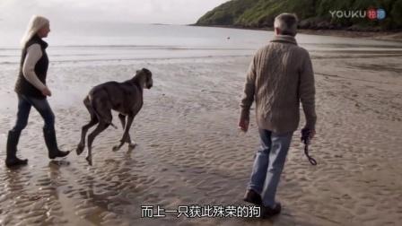 女子:我前夫一直不让我养狗 所以他成了我的前夫!