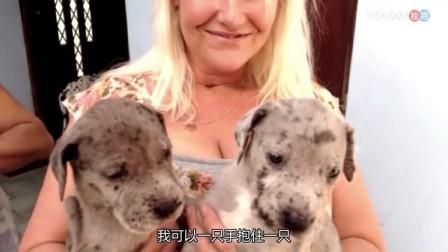 女子去抱养小狗狗 特意挑了2只最小的 谁知现在长这么大!