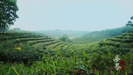 海南白沙绿茶介绍