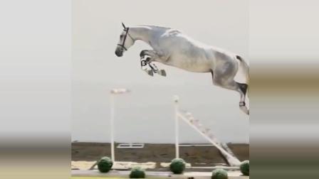 搞笑动物趣事精选, 这些马儿真厉害, 像刘翔一样