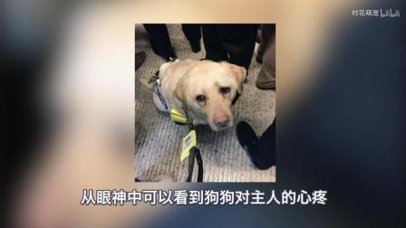 导盲犬带主人上地铁, 发现座位满了, 它的眼神让人难以招架!
