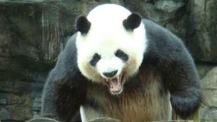 如果大熊猫伤人了, 要不要枪毙它? 先听我给你算笔账!