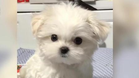 超可爱、搞笑的狗狗视频合集, 萌宠 都成精了, 超级可爱