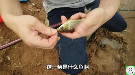 小伙用玉米味的火腿肠钓鱼, 5秒钟就能钓一条, 你试过吗