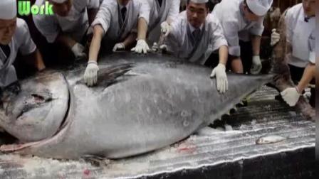 实拍大厨处理金枪鱼全过程 这犀利手法对的起这么大一条鱼