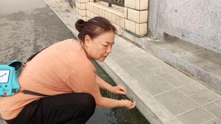 北京暴雨过后: 大鱼小鱼搁浅大桥, 迟来的大妈忙抓小鱼喂乌龟!