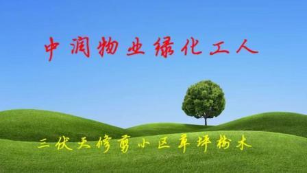 中润物业绿化工人三伏天修剪小区草坪树木