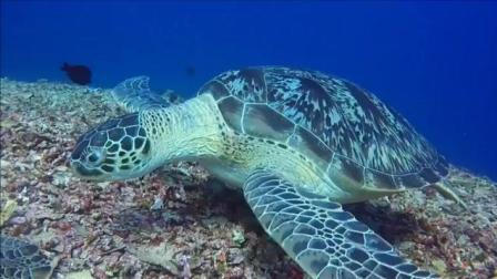 7天造景 海龟