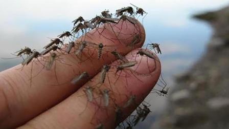 中国最大蚊子工厂  一天释放100万只为什么深受人们欢迎?