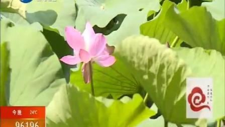 浑河之夏莲花荷花节开幕了