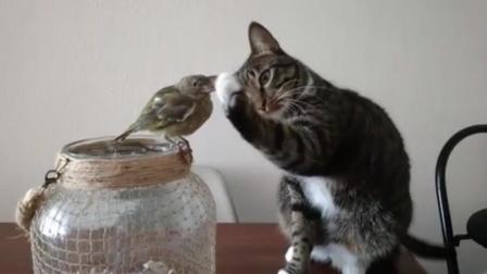猫咪罕见露出柔情 温柔抚摸小鸟羽毛 好奇心浓郁和平共处
