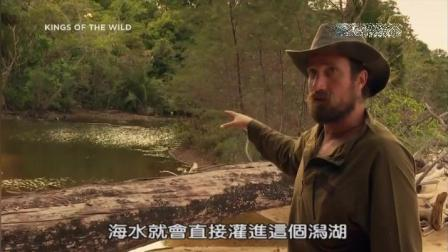 丛林野食王-马来西亚热带岛屿生存美食第一天