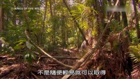 丛林野食王-马来西亚热带岛屿生存美食第六天