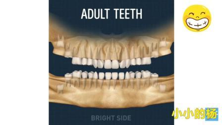 你知道牙齿是怎样长出来的吗 3D动画带来牙齿生长动态图
