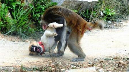 调皮的猴子与憨厚狗狗, 奇怪的组合, 奇妙的反应!