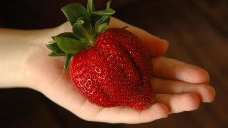 """日本出现世界上最大的草莓, 一个顶5个, 被誉为""""世界上最大的草莓"""""""